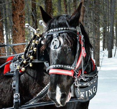 Romantic Private Sleigh Rides in Colorado