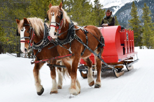 Dinner Theater Sleigh Rides in Breckenridge CO
